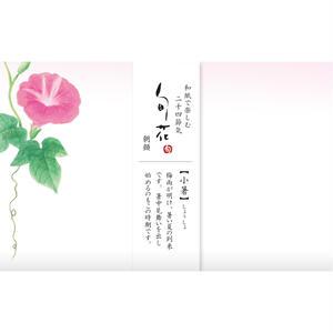 KK146旬花 懐紙 朝顔