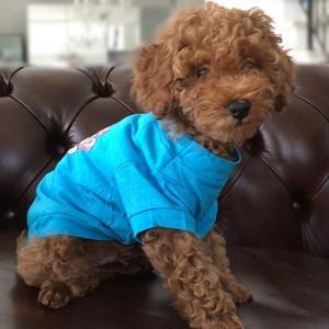 ボーンTシャツ ブルー