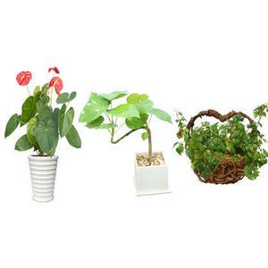 観葉植物素材 3個セット 8kp0006