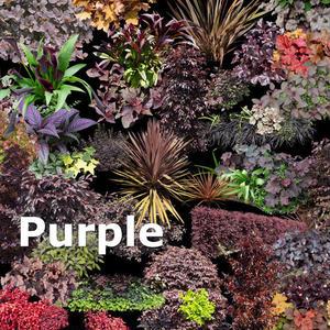 ガーデン庭木素材 パープル系  43個セット  G30_02