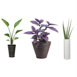 観葉植物素材 3個セット 8kp0003