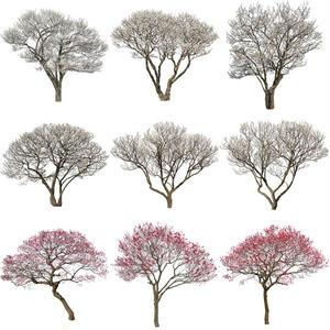 梅 切り抜きセット素材  - Plum trees  2u_06
