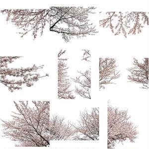桜 切り抜き素材セット  - Cherry Blossoms   sa_013