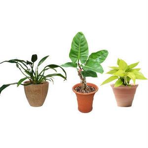 観葉植物素材 3個セット 8kp0016