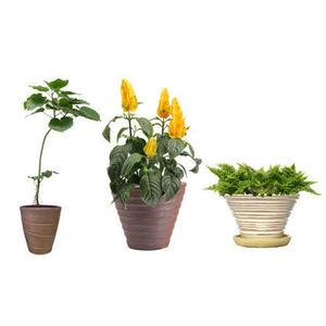 観葉植物素材 3個セット 8kp0009