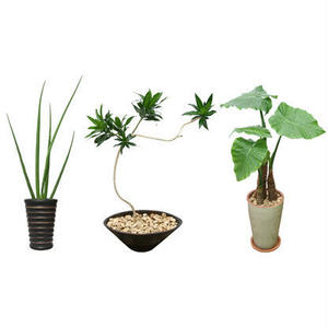 観葉植物素材 3個セット 8kp0002