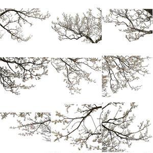梅 切り抜きセット素材  - Plum trees  2u_04