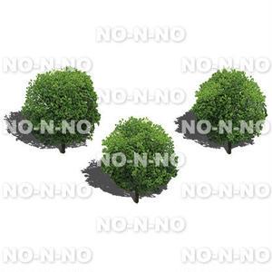 鳥瞰3本樹木 - BirdEye 2b007 ヤマモモ