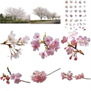 桜 切り抜き素材セット  - Cherry Blossoms   sa_015