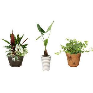 観葉植物素材 3個セット 8kp0015