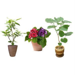 観葉植物素材 3個セット 8kp0010