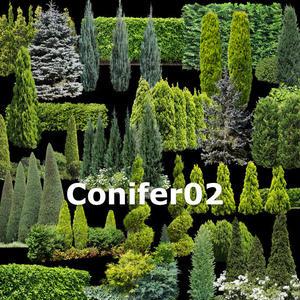 ガーデン庭木素材 コニファー  37個セット  G30_07