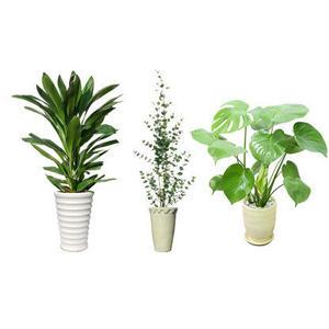 観葉植物素材 3個セット 8kp0017