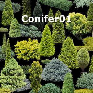 ガーデン庭木素材 コニファー  37個セット  G30_06