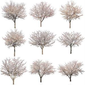 桜 切り抜き素材セット  - Cherry Blossoms   sa_009