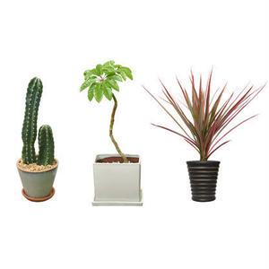 観葉植物素材 3個セット 8kp0007