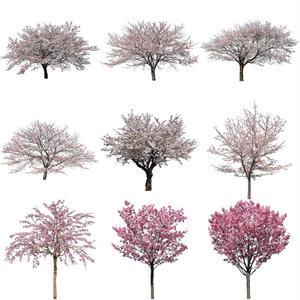 桜 切り抜き素材セット  - Cherry Blossoms   sa_001