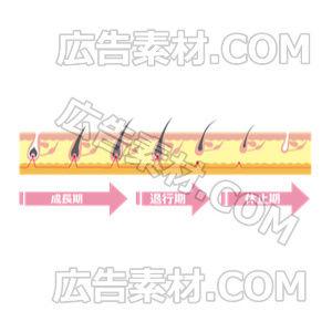 毛周期シンプル「ピンク」(形式PNG/サイズ640*480)