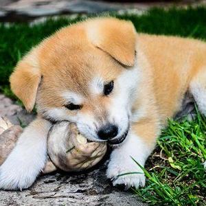 ペットアフィリエイト「犬のしつけ方」記事テンプレート(4900文字)