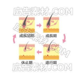 抜け毛になるサイクル「ピンク」(形式PNG/サイズ640*640)