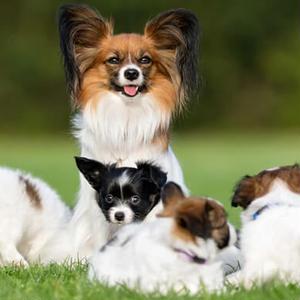 ペットアフィリエイト「ペットの保険」記事テンプレート(ペラサイト・ブログ兼用/5700文字)