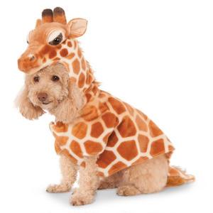 ペットアフィリエイト「犬の洋服の選び方」記事テンプレート(5500文字)