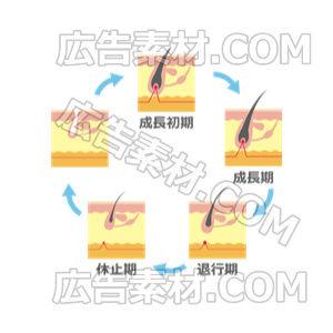 毛周期スタンダート「ブルー」(形式PNG/サイズ640*640)