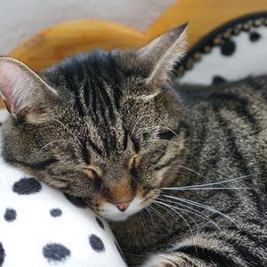 ペットアフィリエイト「猫の飼い方」記事テンプレート(2000文字)