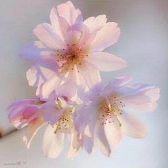 【リンク  花、空…】daiちゃんの お花photoツイート紹介です