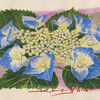 「額紫陽花ー清涼」画用紙にテンペラ画