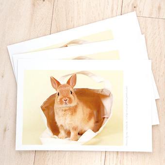 子うさぎのポストカード(10枚セット)