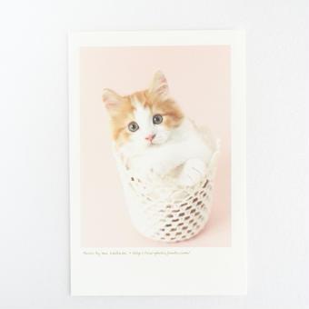 フォトカード_cat4(マンチカン)