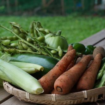 おためし野菜セットL 2回分(送料1回分無料)