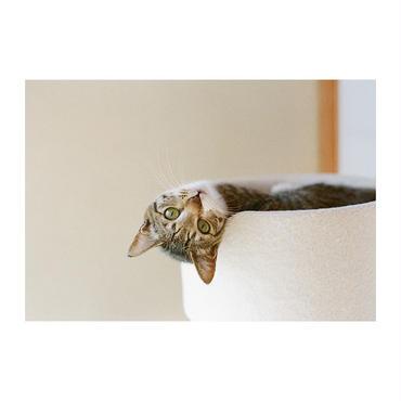 ポストカード しずく(横使い) 見返り猫