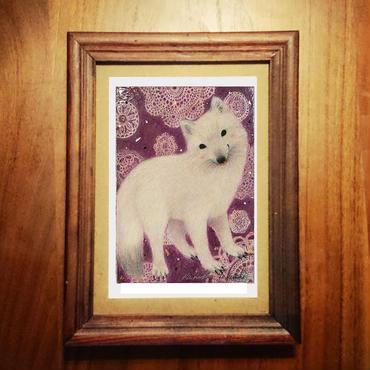 ポストカード 「Arctic fox」