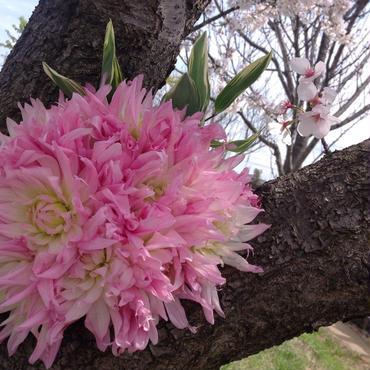 季節の花束バリューパックラッピング付き