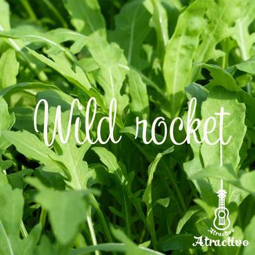 ルッコラより味が濃いハーブ・ワイルドロケットの種
