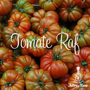 スペインの高級品種のトマト(トマテ・ラフ)の種