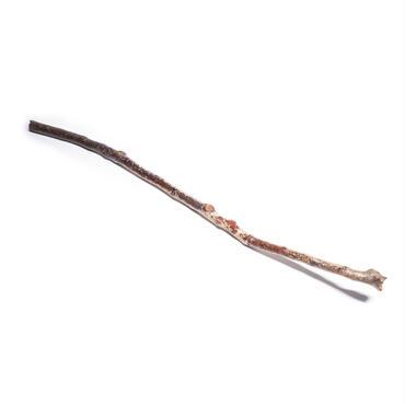 きれいな枝(一般的な長さの枝)