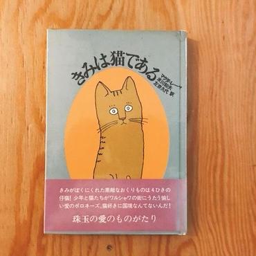 マグダ・レーヤ  きみは猫である