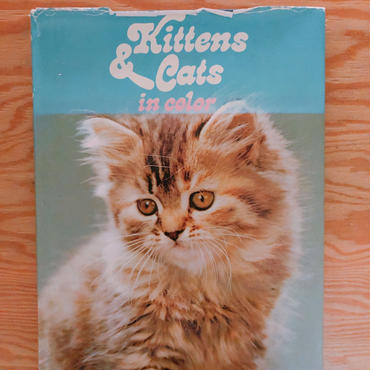Kittens&Cats In Color