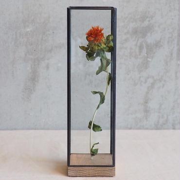 【select】Showcase Long60 C