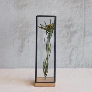 【select】Showcase Long60 G