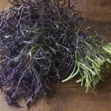 「ピリリと辛い」無農薬からし水菜苗<1株> (神奈川県産)