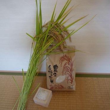 五分づき米@微生物&減農薬農法/コシヒカリ3kg