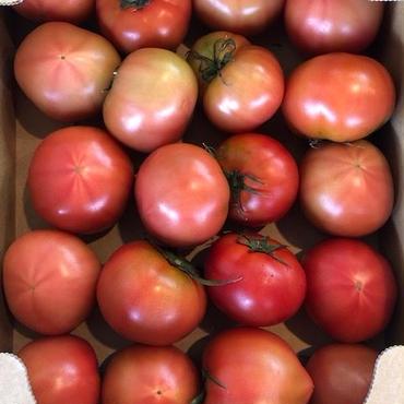 邑楽館林トマト