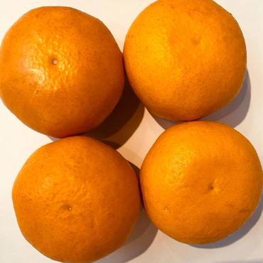 サンフルーツ4玉