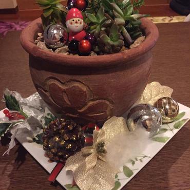 多肉たちのクリスマス♡