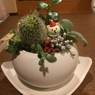 サボテンと多肉の寄せ植え♡クリスマスバージョン☆