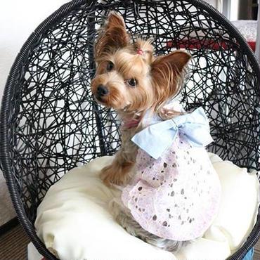 トワエモア ペット服透けワンピ大きなリボンがかわいい 小型犬 送料無料